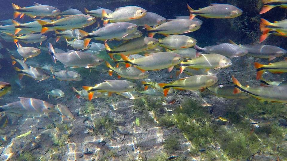 flutuação_peixes